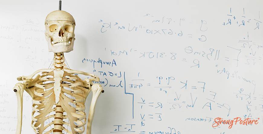Posture Anatomy